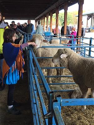 15ny_sheep_large
